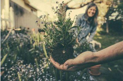 Handige tips en trends voor de verbouwing van je tuin