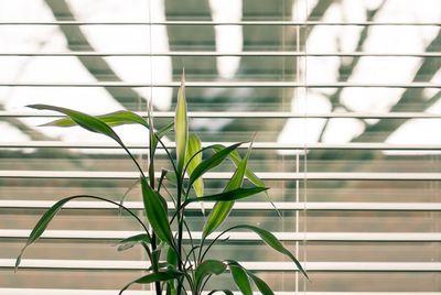 Zo maak je raamdecoratie schoon