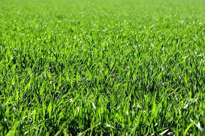 Zelf graszoden leggen: waar moet je beginnen?