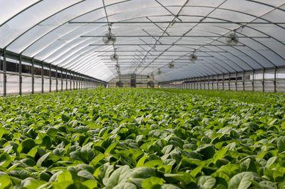 Keuzes vanuit de politiek met betrekking tot glastuinbouw