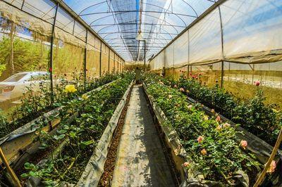 Tijd voor een betere oogst in 2019? Met deze 7 tips ruim jij de tuinkas op!