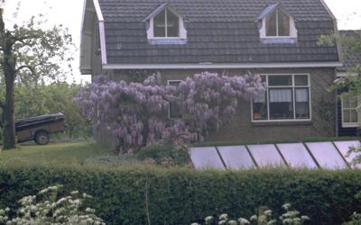 Blauweregen - Wisteria sinensis