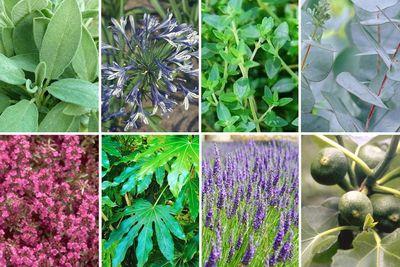 Borderplan Aimée - Borderpakket Mediterrane tuinplanten - Vaste planten, heesters, bomen - Roze, paars & blauw - vanaf 4 m2