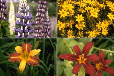 Borderplan Hanne - Vaste planten borderpakket - Meerkleurige bloemen - Zon