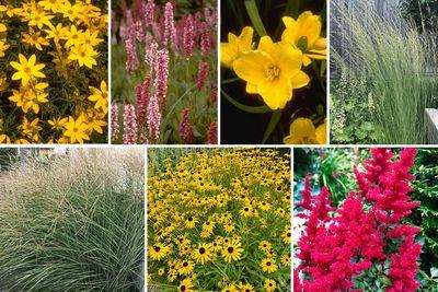 Borderplan Ilse - Vaste planten & siergras borderpakket - vanaf 2m2 - Rood & Geel - Veengrond - Halfschaduw & Zon