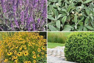 Borderplan Joyce - Vaste planten borderpakket - Paars & Geel - Zon