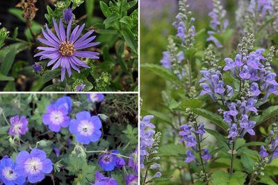 Borderplan Michel - Vaste planten borderpakket - Laatbloeiende tuinplanten - Paars - najaarsbloeiers borderpakket