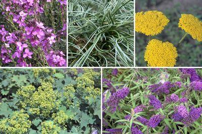 Borderplan Ricky - Borderpakket voor de zonnige tuin - Paars & Geel