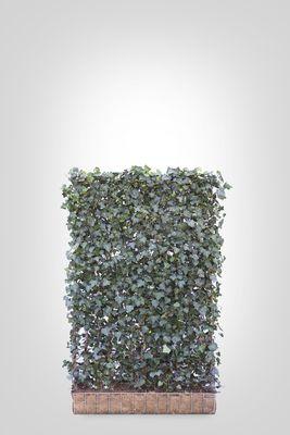 Hedera scherm (M) - 180h x 120b - Trellis + Hedera klimop haag (kant en klaar)