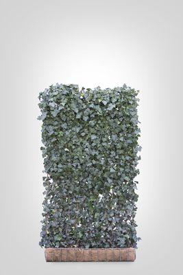 Hedera scherm (XL) - 220h x 120b - Trellis + Hedera klimop haag (kant en klaar)