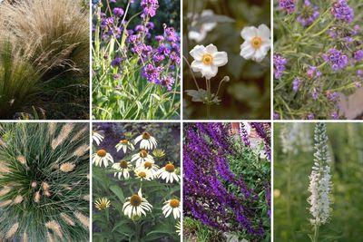 Borderplan Henk jan - Compleet borderpakket vanaf 3 m2 - Siergras en vaste planten - Paars & Wit - Zon