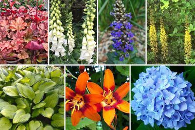 Borderplan Lucas - Vaste planten & heesters voor de schaduw - Blauw, Paars & Oranje