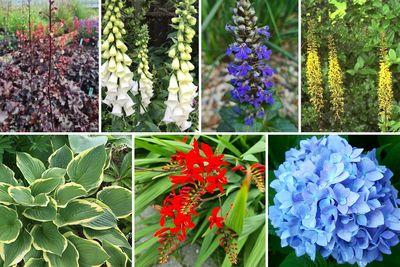 Borderplan Lucas - Vaste planten & heesters voor de schaduw - Blauw, Paars, Wit, Geel & Rood