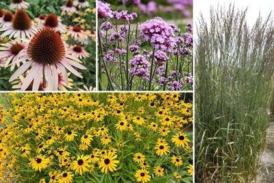 Borderplan Rens - Vaste planten borderpakket - Paars, Roze & Geel - Prairietuin - Prairieborder - Zon