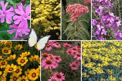 Borderplan Saar - Vaste planten borderpakket - Vlindertuin - Roze & Geel - Zon
