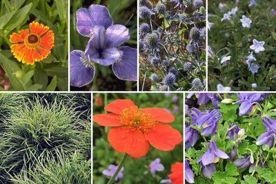 Borderplan Tom - Vaste planten & siergras borderpakket - vanaf 2m2 - Blauw & Oranje - Veengrond - Halfschaduw & Zon