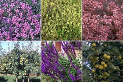 Borderplan Willemijn - Borderpakket onderhoudsarm tuinplanten voor vogels, vlinders & bijen - Halfschaduw & Zon - Paars, Blauw & Roze