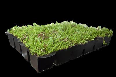 Sedumdak Cassette - Covergreen Groendak sedumtray  - per 57x38 (0,22 m2)