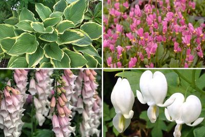 Borderplan Milan - Vaste planten borderpakket - Schaduwplanten - Wit & Roze