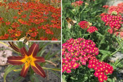 Borderplan Julian - Vaste planten borderpakket - Bijen - Bijvriendelijke tuinplanten - Rood - Zon
