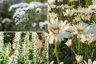 Borderplan Evi - Vaste planten borderpakket - Bijen - Bijvriendelijke tuinplanten - Wit - Zon