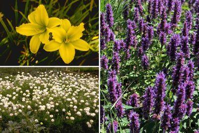 Borderplan Niek - Vaste planten borderpakket - Eetbaar - Paars, Geel & Wit - Halfschaduw & Zon