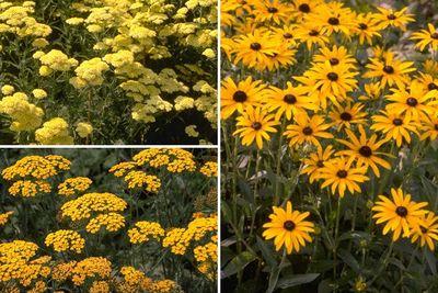 Borderplan Janneke - Vaste planten borderpakket - Geel - Zon