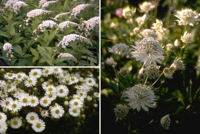 Borderpakket- Kleigrond - Vaste planten klei bodem - Halfschaduw / zon - Wit