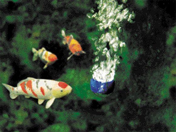 oase-aquaoxy-1000-03.jpg