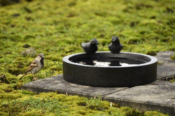 Vogelbad terrazzo rond