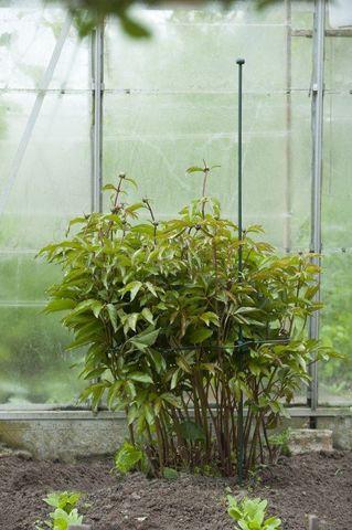 nature-plantenring-schulprand-45cm2