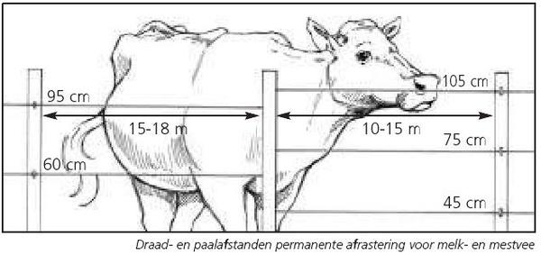 Hoogte schrikdraad runderen vee