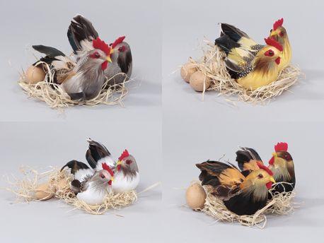 Kippen Met Eieren