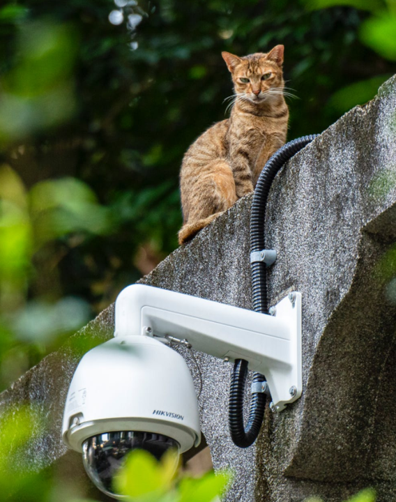 dome camera voor buiten
