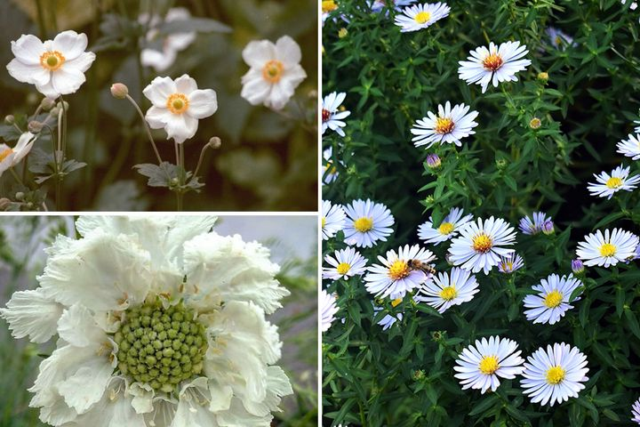 Borderplan Greet - Vaste planten borderpakket - Wit - najaarsbloeiers