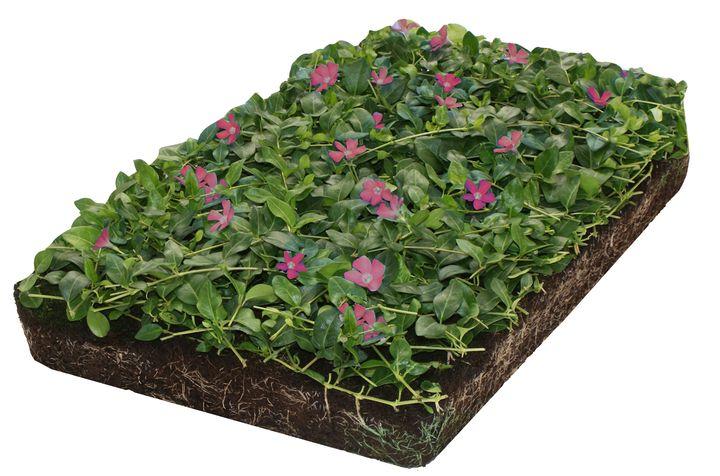 kant en klare bodembedekkers onderhouds arm snel groen