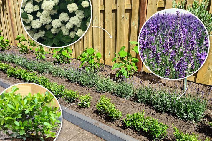 tuinplanten borderpakket halfschaduw zon schaduw vaste planten bloei