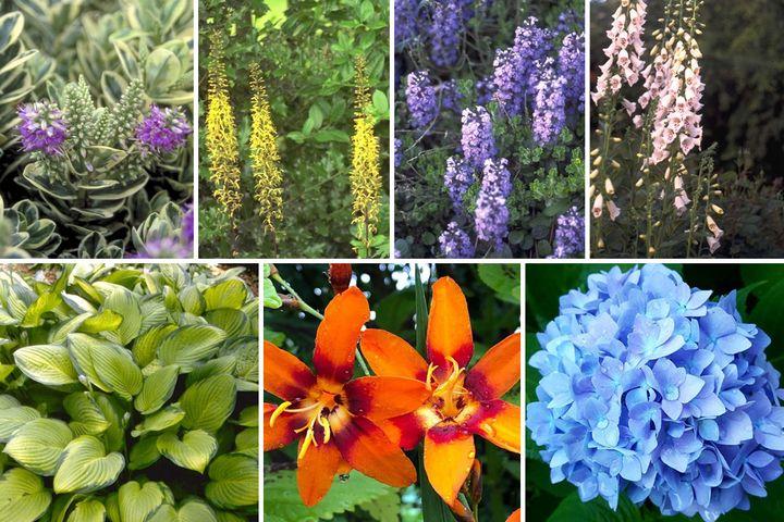 Schaduwborder pakket prachtige bloeiende vaste planten schaduw