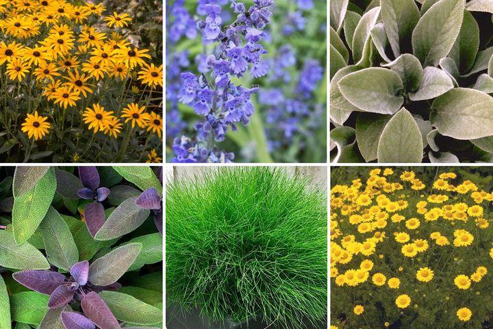 geel paars tuinplanten vaste planten pakket