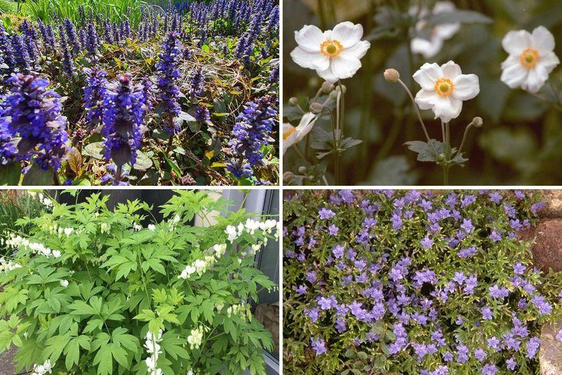 Borderplan Annet - Vaste planten borderpakket - vroegbloeiende tuinplanten