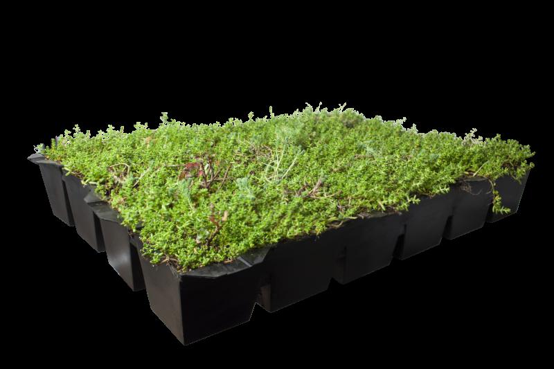 Sedum cassettes covergreen kant en klare groene daken