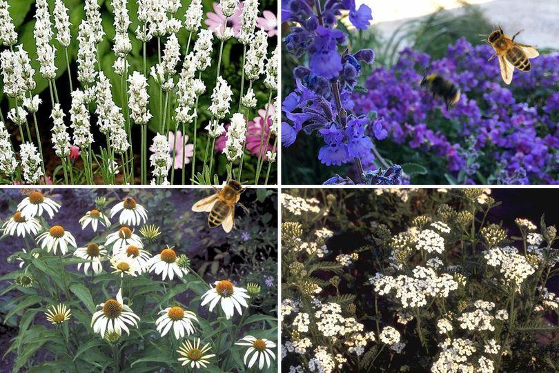 Bijvriendelijke tuinplanten - wit & paars - Zon