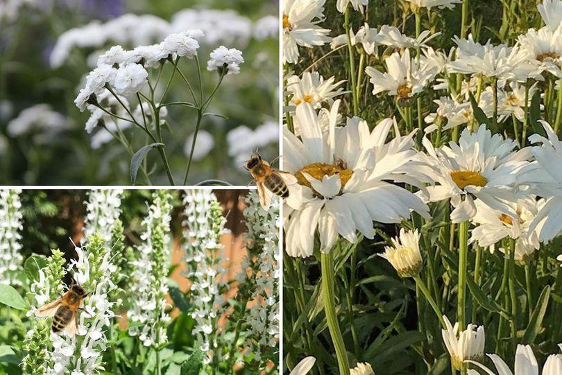 Wit borderpakket bijenplanten