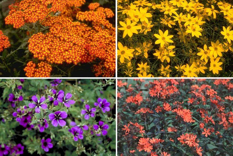 meer kleurige tuinplanten