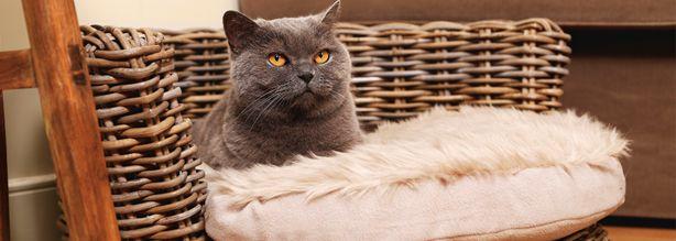 Kattenmanden en -bakken