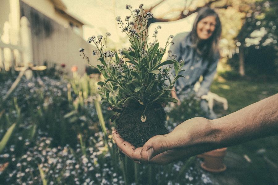Tuinplant Groen
