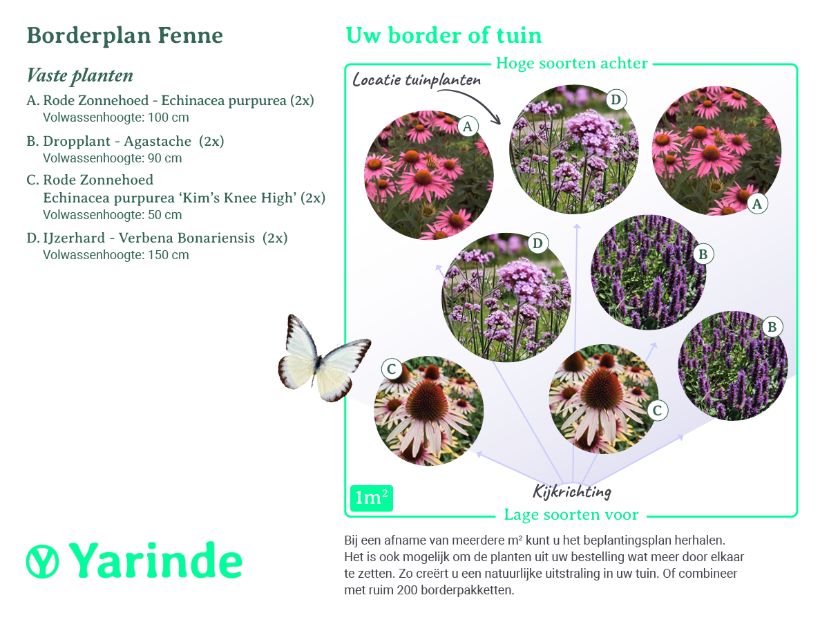 beplantingsplan borderpakket Fenne tuinplanten