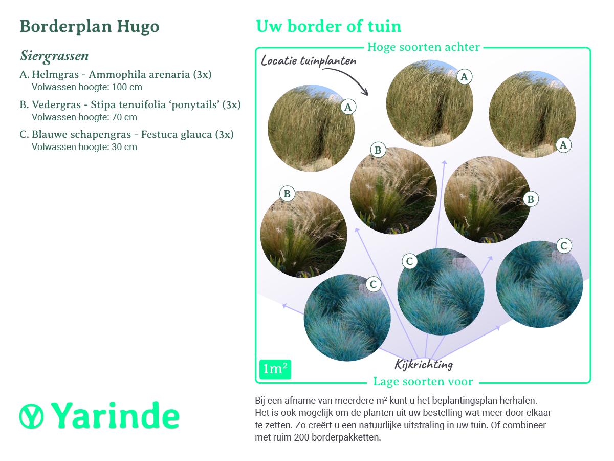 Beplantingsplan Hugo