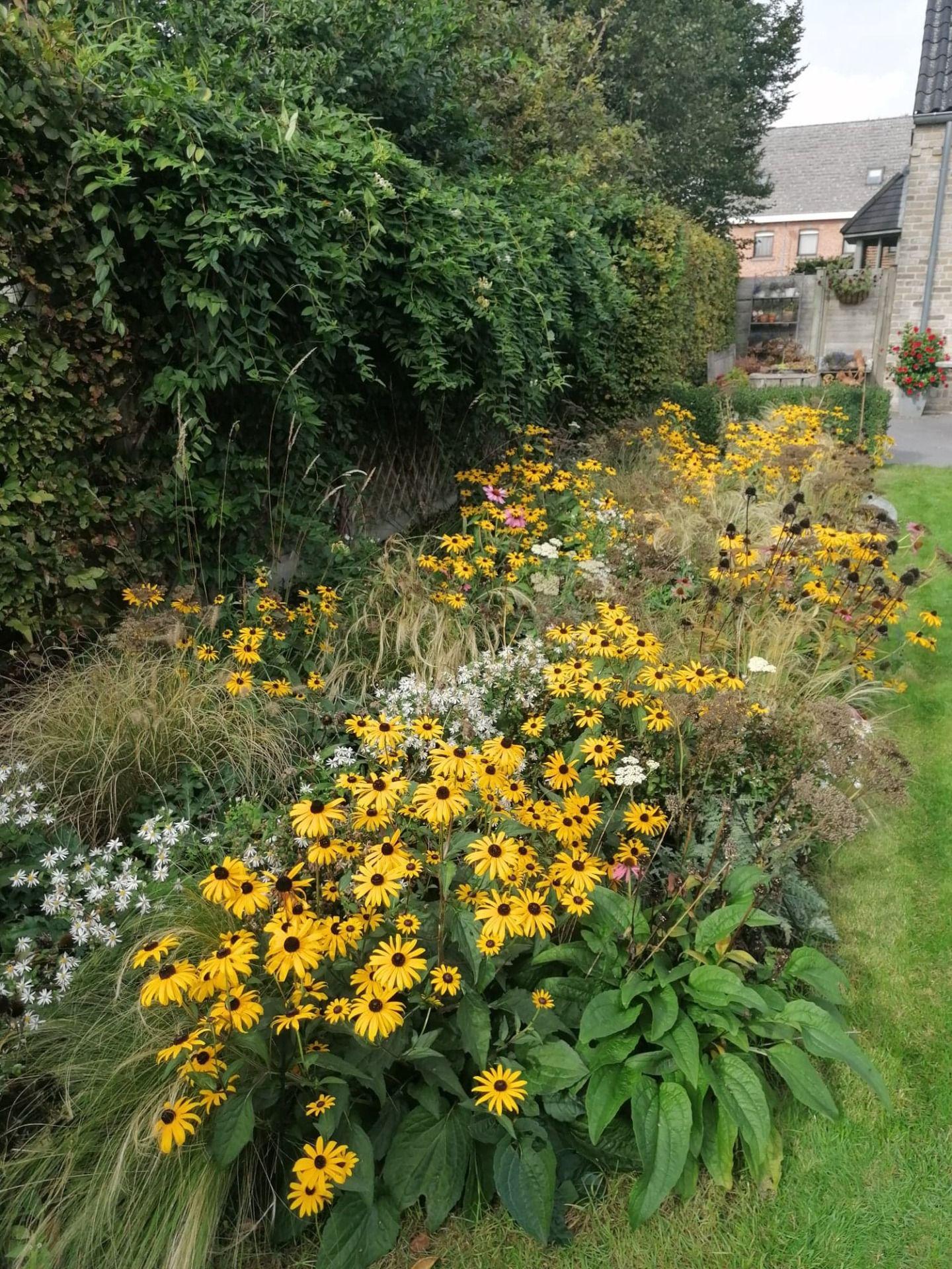 Borderpakket dries invalshoek tuinplanten aanplanten