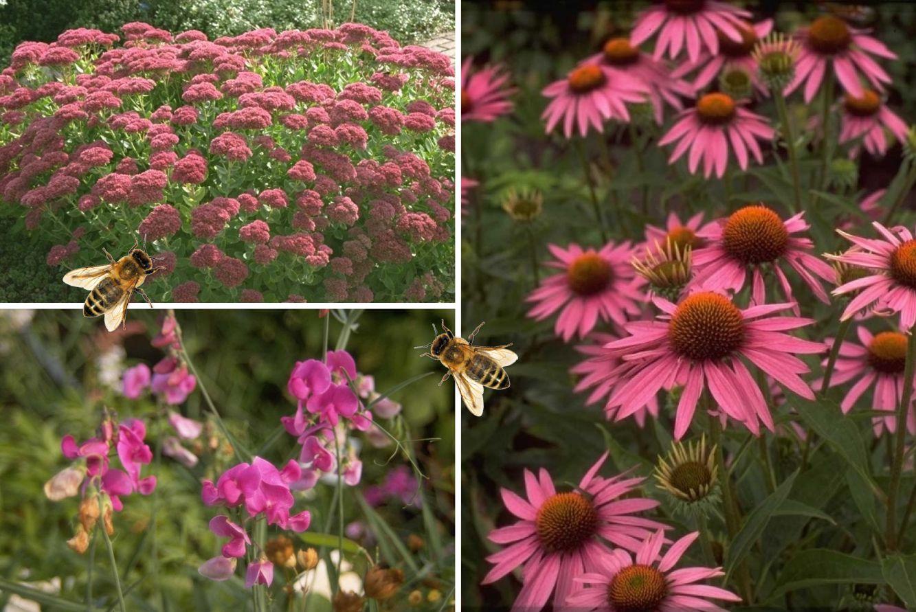 Prachtig tuinplanten pakket roze bloeiende bijenplanten